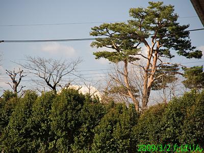 ishikawapa_2.jpg