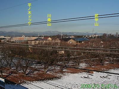 seibutachikawa_5.jpg