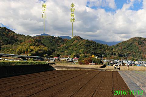 tsuru_2.jpg