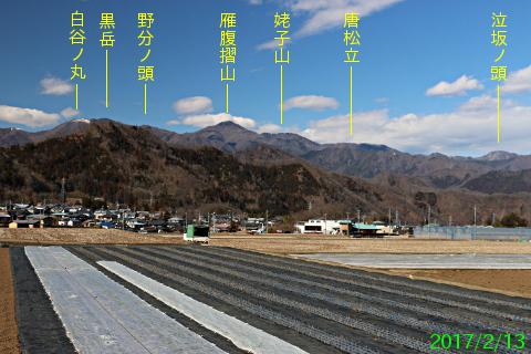 tsuru_3.jpg