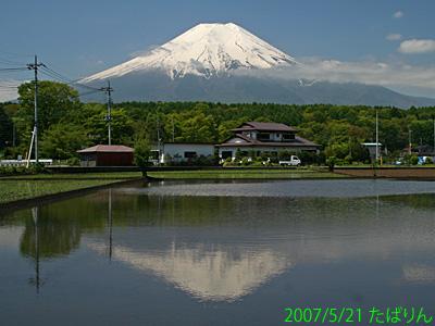 shibokusa_3.jpg