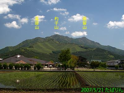 shibokusa_4.jpg