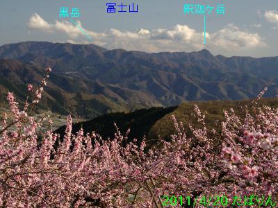 fukuori_2.jpg