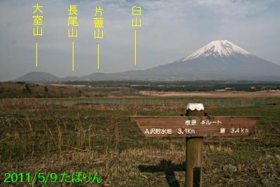 nebara_2.jpg