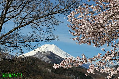 2019年4月11日の富士山